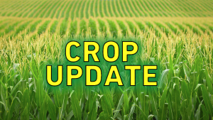 USDA Reports on Corn Crops